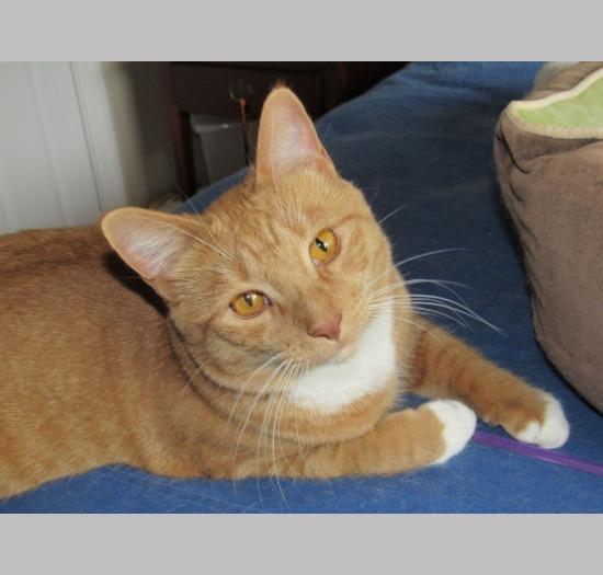 Care Chatham Animal Rescue Amp Education Nc Pet Adoption