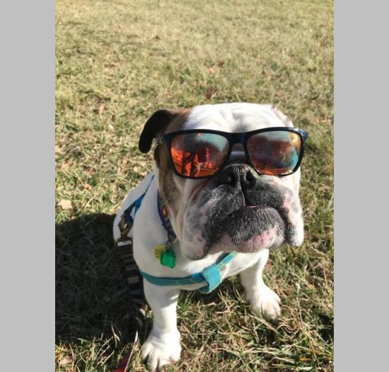 3ac0e814b3c Cool Dog Gus (January ...
