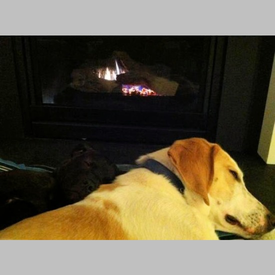 Shhhhhh....snuggles by the fire! (February 2012)