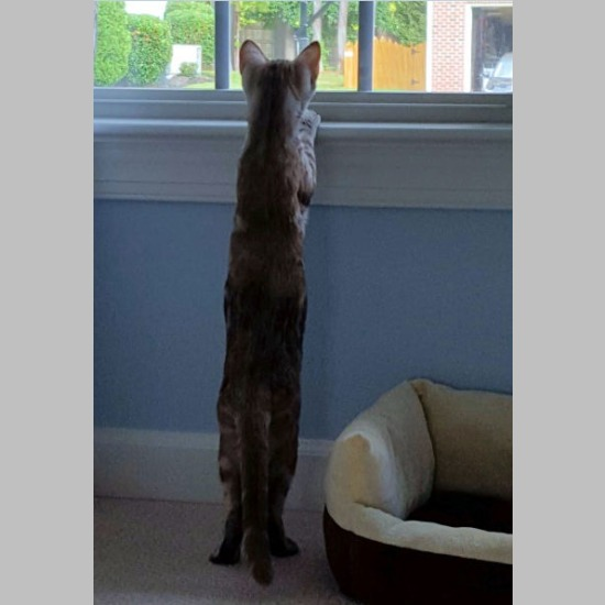 Willow on Watch (September 2015)