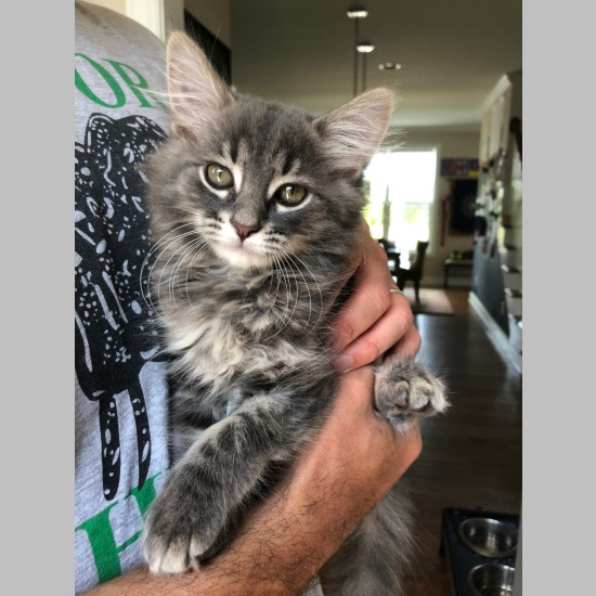 bf6d4d4ad Shimmer [Adoption Application] Show Information Snapshot Number: C19029AC  Breed: Domestic Medium Hair Mix Sex: Female Born: April 2019 (0 yrs 3 mos)