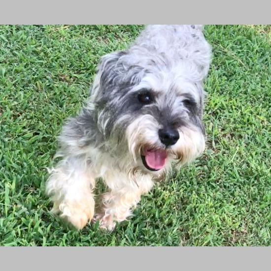 CARE: Chatham Animal Rescue & Education - NC Pet Adoption