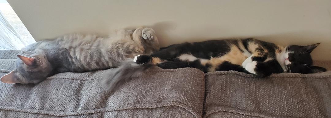 Biscuit (Delilah) and Hushpuppy (Margaret)
